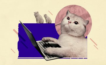 We ranked famous internet cats from meme-worthy to unmeme-able