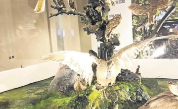 The National Museum of Natural History opens on International Museum Day