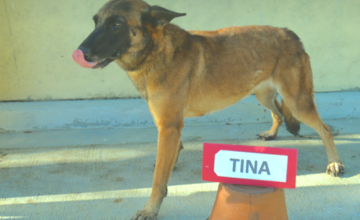 These 13 retired PDEA dogs need a forever home