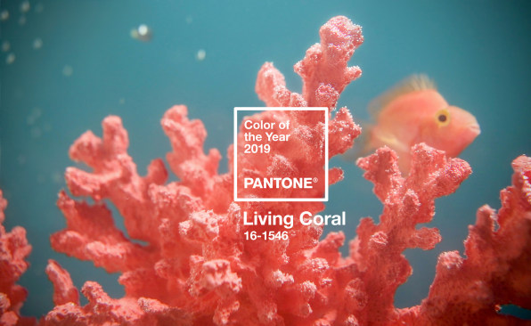 Living Coral is 2019's Pantone Color of the Year and we're living