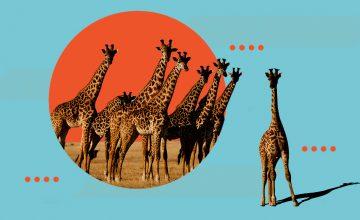 Wake up, world: Giraffes are officially endangered