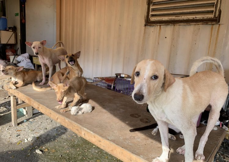 PSA: Around 70 dogs need your help right now