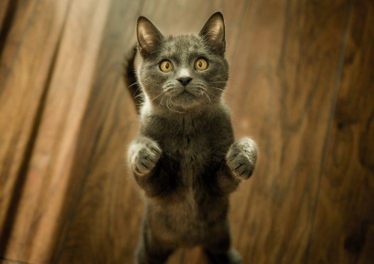 FYI: Declawing your feline friend is really cruel
