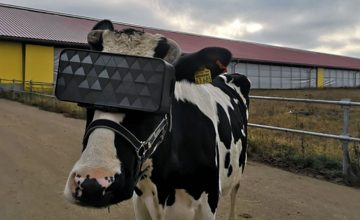 This cow is rocking a VR headset and we want to know why