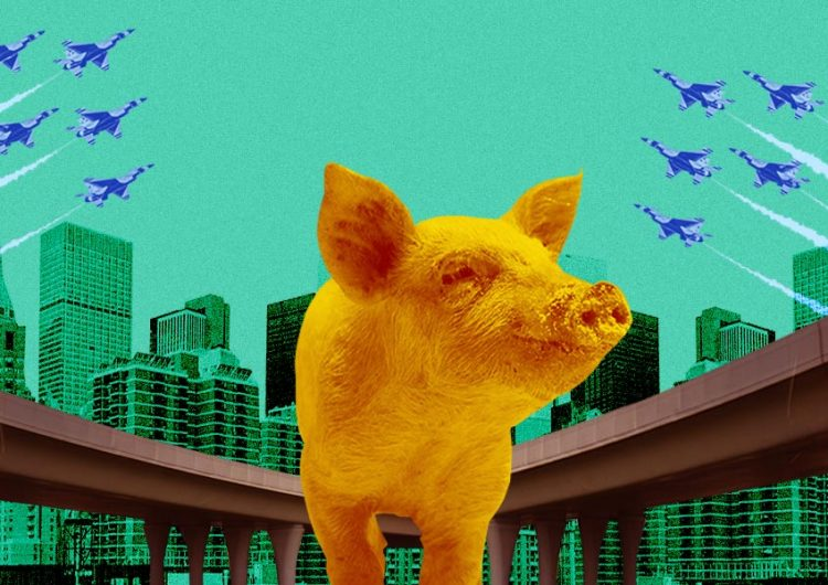 I, too, would like to run freely in the flyover like this pig in Cebu