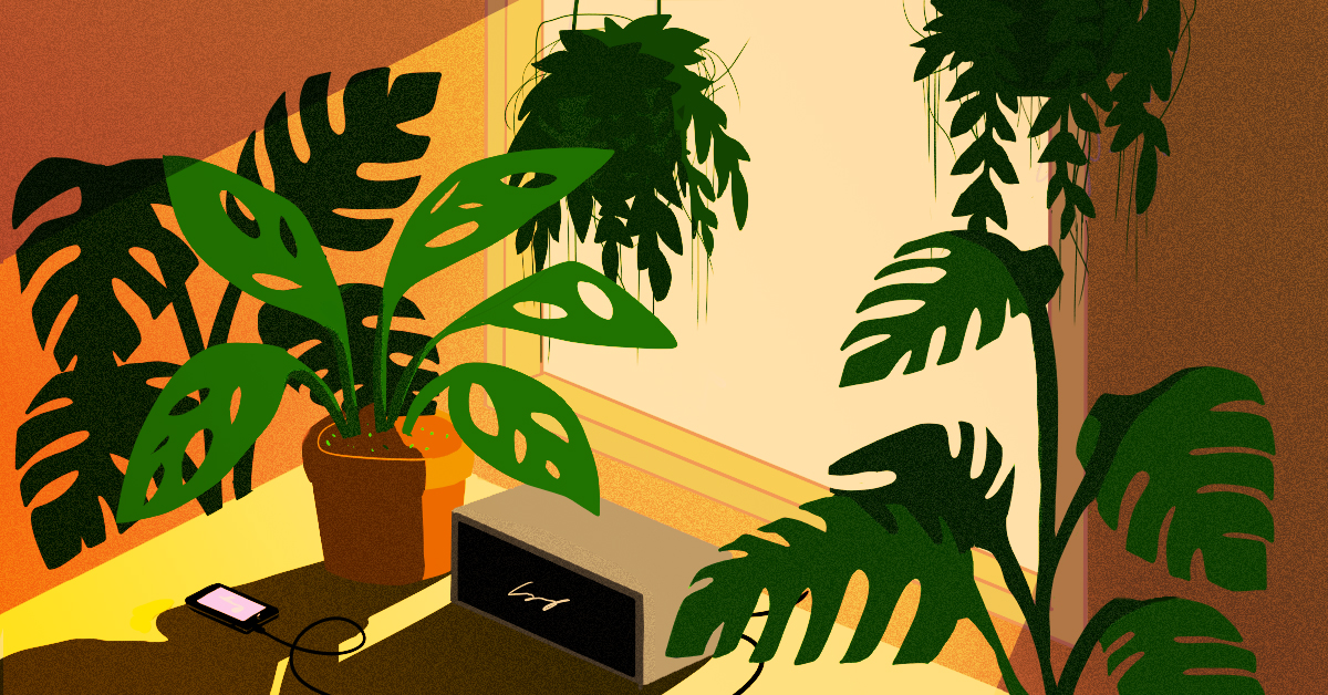 How growing my own house plants changed my life